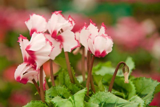 Thơ về hoa - Tổng hợp những bài thơ hay nhất mà bạn không nên bỏ lỡ