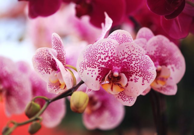 Tuyển tập những bài thơ về hoa lan kiêu sa hay nhiều cảm xúc nhất