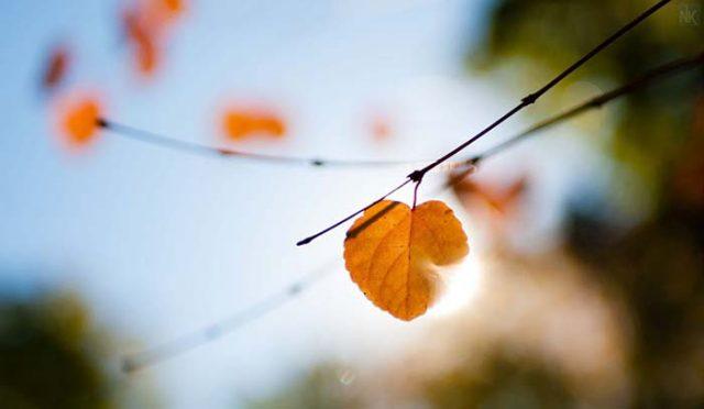 #40 bài thơ buồn về mùa thu cô đơn, nhớ người yêu hay nhất