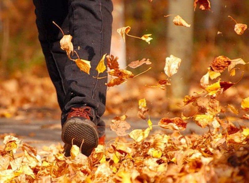 Bài thơ Em đi tìm nhặt lá vàng