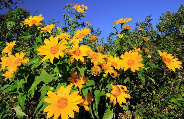 Bài thơ Hoa vàng phố núi