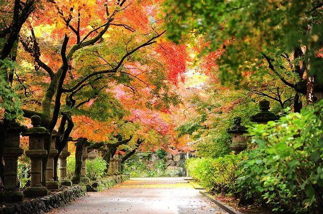 Bài thơ Ký ức cuối mùa thu
