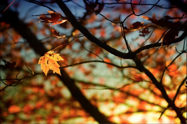 Bài thơ Mùa thu rụng lá