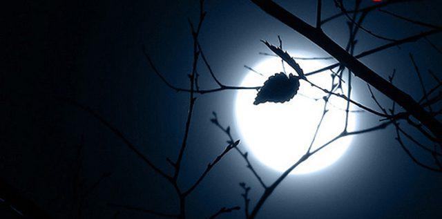 Bài thơ Đêm thơ Nguyên tiêu