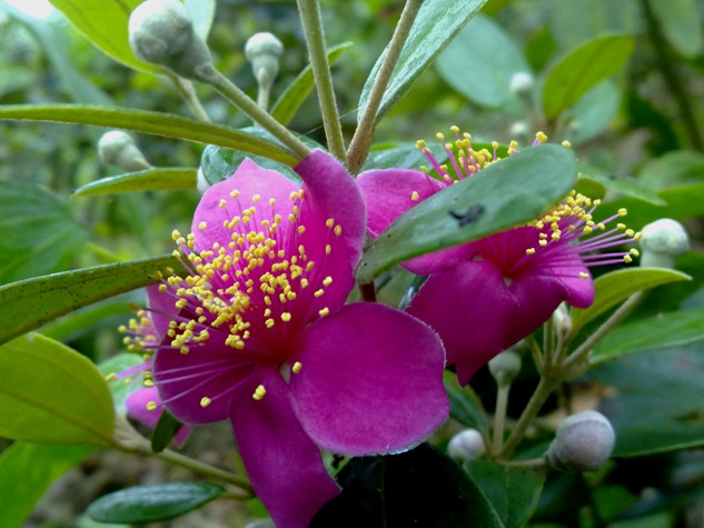 màu tím hoa sim