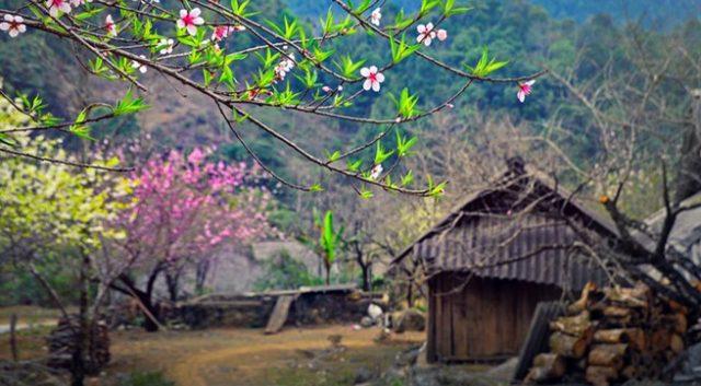 Tuyển tập những bài thơ 7 chữ hay nhất về mùa xuân, tình yêu và mùa thu