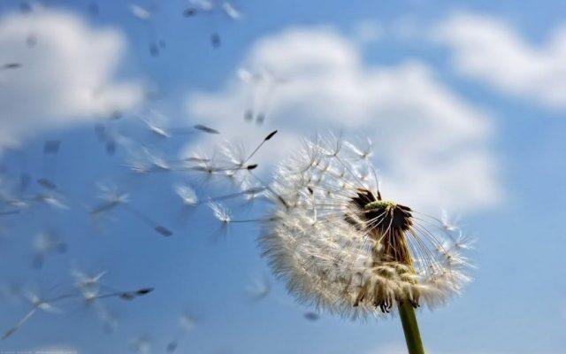 thơ ngắn về gió